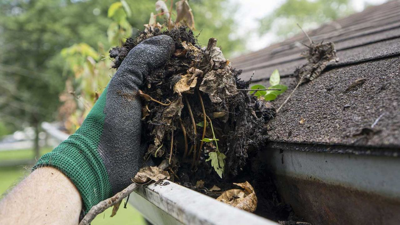 Professional gutter contractor cleaning gutters