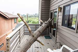 Fallen tree on deck after storm