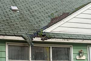 Algae growing on roof that needs to be replaced