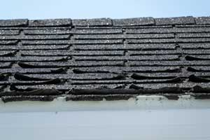 Cracked and curled shingles on roof
